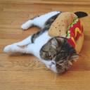 Déguisement chat hot dog