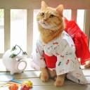Déguisement chat kimono
