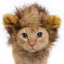Déguisement chat lionceau