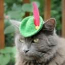 Déguisement chat Robin des Bois