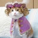 Déguisement chat royal