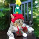 Déguisement chat sapin de Noël