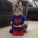 Déguisement chat Superman