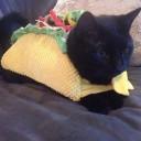 Déguisement chat tacos