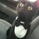Déguisement chat tuxedo