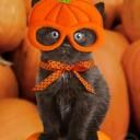 Déguisement chaton citrouille
