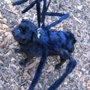 Déguisement chien araignée