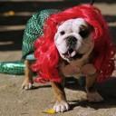 Déguisement chien Ariel la Petite Sirène