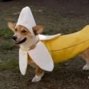 Déguisement chien banane