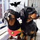 Déguisement chien Batman et Robin