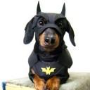 Déguisement chien Batman