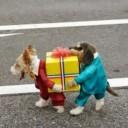 Déguisement chien cadeau