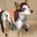 Déguisement chien cheval
