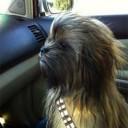 Déguisement chien Chewbaca