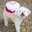 Déguisement chien cupcake