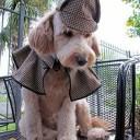 Déguisement chien détective