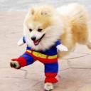Déguisement chien en Superman