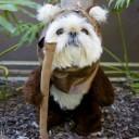 Déguisement chien Ewok