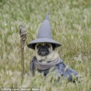 Déguisement chien Gandalf