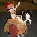 Déguisement chien gladiateur
