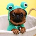 Déguisement chien grenouille