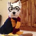 Déguisement chien Harry Potter