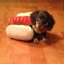 Déguisement chien hot dog