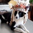 Déguisement chien indien