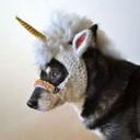 Déguisement chien licorne