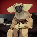 Déguisement chien Maître Yoda