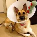 Déguisement chien Martini