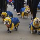 Déguisement chien Minion