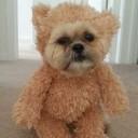 Déguisement chien ourson