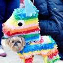 Déguisement chien pinata