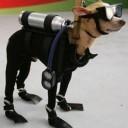 Déguisement chien plongeur