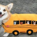 Déguisement chien school bus