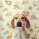 Déguisement chien vampire