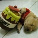 Déguisement chien Winnie l'Ourson