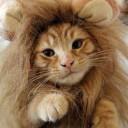 Déguisement de chat lion