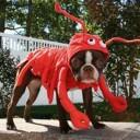 Déguisement de chien homard