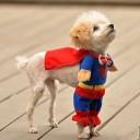 Déguisement de chien Superman