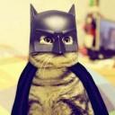 Déguisement pour chat Batman