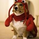Déguisement pour chien homard