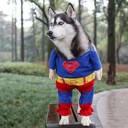 Déguisement pour chien Superman