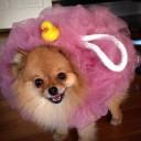 Déguisement chien fleur de bain