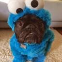 Déguisement chien Monster Cookie