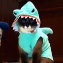 Déguisement pour chat requin