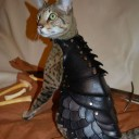 Déguisement chat Game of Thrones 2