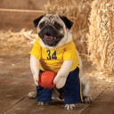 Déguisement chien basketteur
