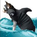 Déguisement de chat requin